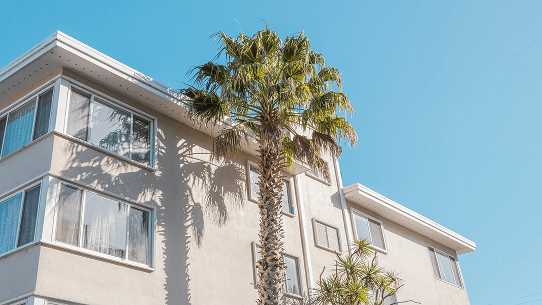 palm tree in front of a white building in the daytime